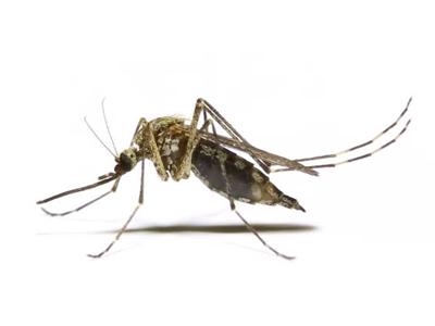 Mosquito control Qatar