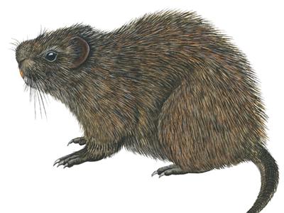 Rats Control Qatar