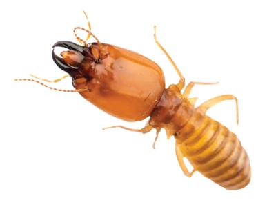 Termite Control Qatar